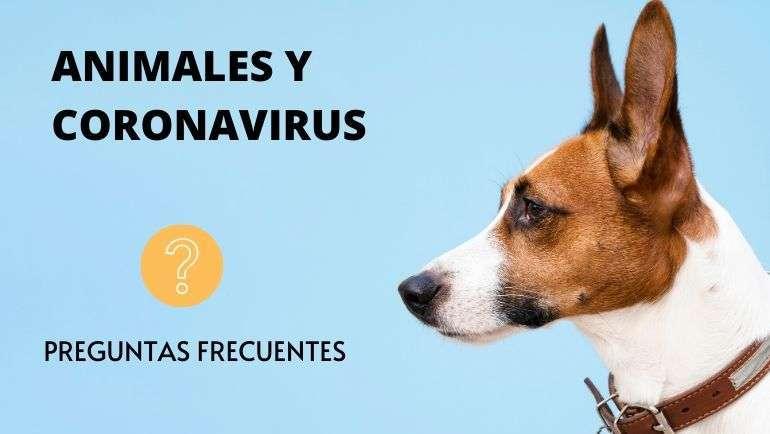Animales de compañía y coronavirus: preguntas frecuentes