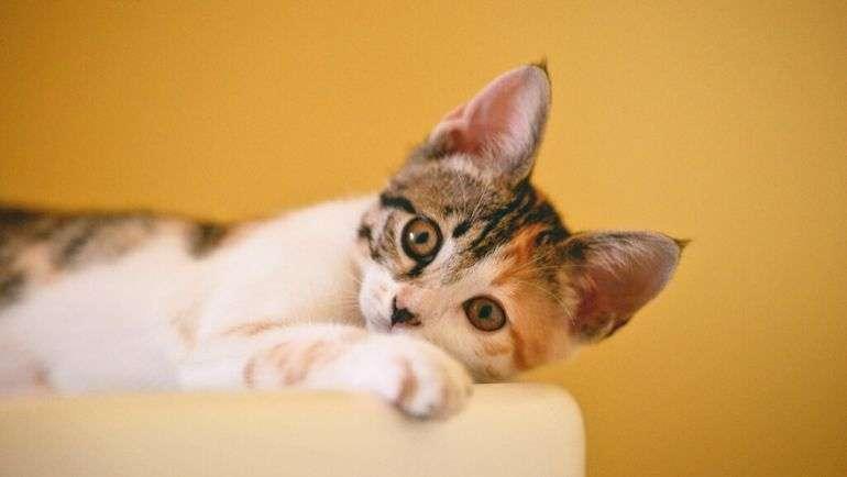 Red de espacios seguros para animales de compañía de víctimas de violencia machista