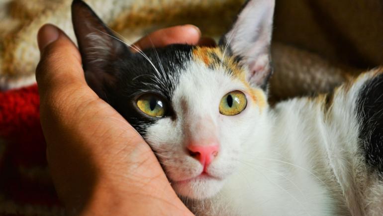 El Ayuntamiento delimita dos áreas para controlar las colonias de gatos