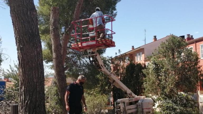El mal estado de algunos árboles obliga al Ayuntamiento a talarlos para prevenir riesgos