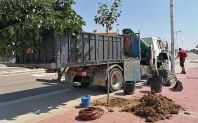 El Ayuntamiento continua con la plantación y cuidado de árboles en el municipio